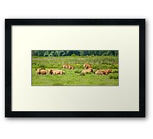 Cows on a field  Framed Print