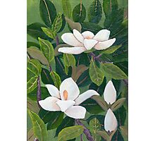 Magnolia II ~ Floral ~ Oil Painting Photographic Print