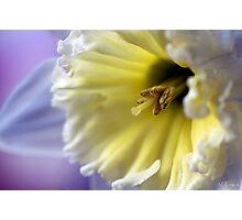 pastel Photographic Print