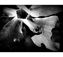 spider's shadow Photographic Print