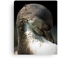 Humboldt Penguin Canvas Print