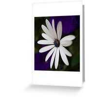 Daisy Whites Greeting Card