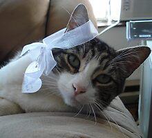 Kitty kitty Kitttttttttty by Mike Edmondson