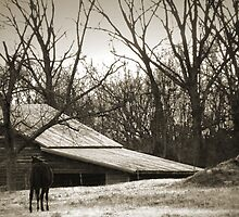 """""""An Old Friend Headed To The Barn"""" by franticflagwave"""