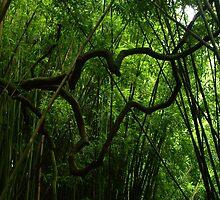 "Heart-Shaped Bamboo Hangs Across Path ""Bamboo Love"" by iseezu"