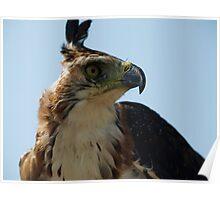 "Ornate Hawk Eagle ""Profile of a Prince"" Poster"