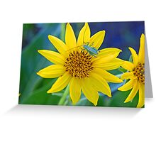 """Grasshopper on Sunflower """"BaskinGrass"""" Greeting Card"""