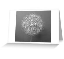 Stary,Stary Night! Greeting Card