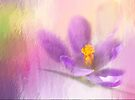 Spring Is Here by Diane Schuster