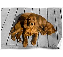 Applegrove Puppies Poster