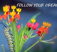 """Follow Your Dreams"" greeting card by AuntDot"