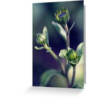Daisies on their way Greeting Card