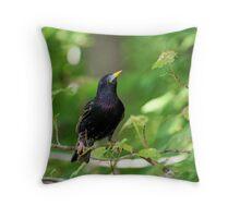 European Starling Sturnus vulgaris  Throw Pillow