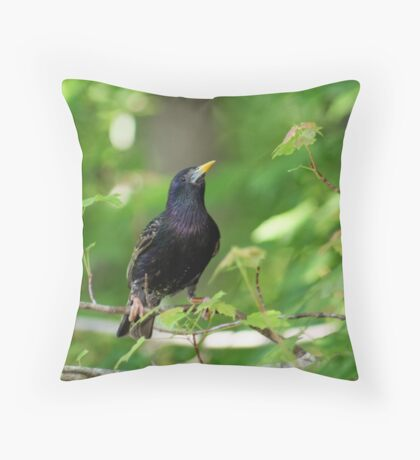 European Starling Sturnus vulgaris  Throw Pillow