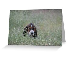 little boy lost in the grass Greeting Card
