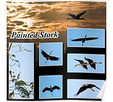 Painted Stork Collage Poster