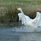 Splash Dance by Terence Russell