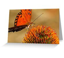 Monarch or is it a Painted Lady...?? at sunset on a Cone Flower..ok found it it's a  Gulf Fritillary Greeting Card