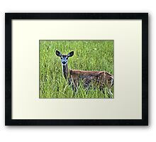 Doe In The Field Framed Print