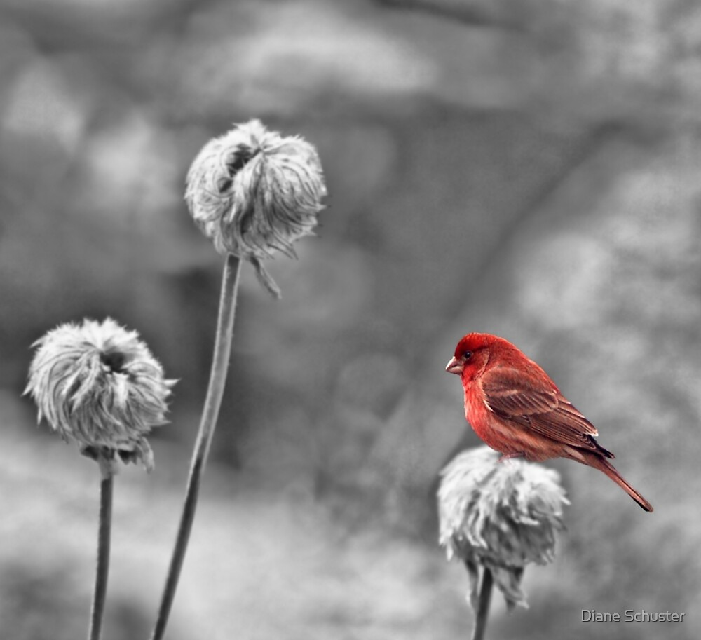 Please God I Need Spring! by Diane Schuster