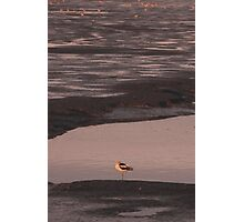 Sunset on the mud flats of San Francisco Bay Photographic Print