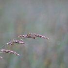 Summer Grass 7 by vigor