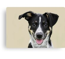 My name is 'Bella' Canvas Print