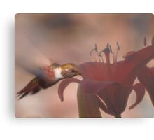 First Light And The Nectar's Just Right! Canvas Print