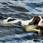 Swimming Springer by JEZ22