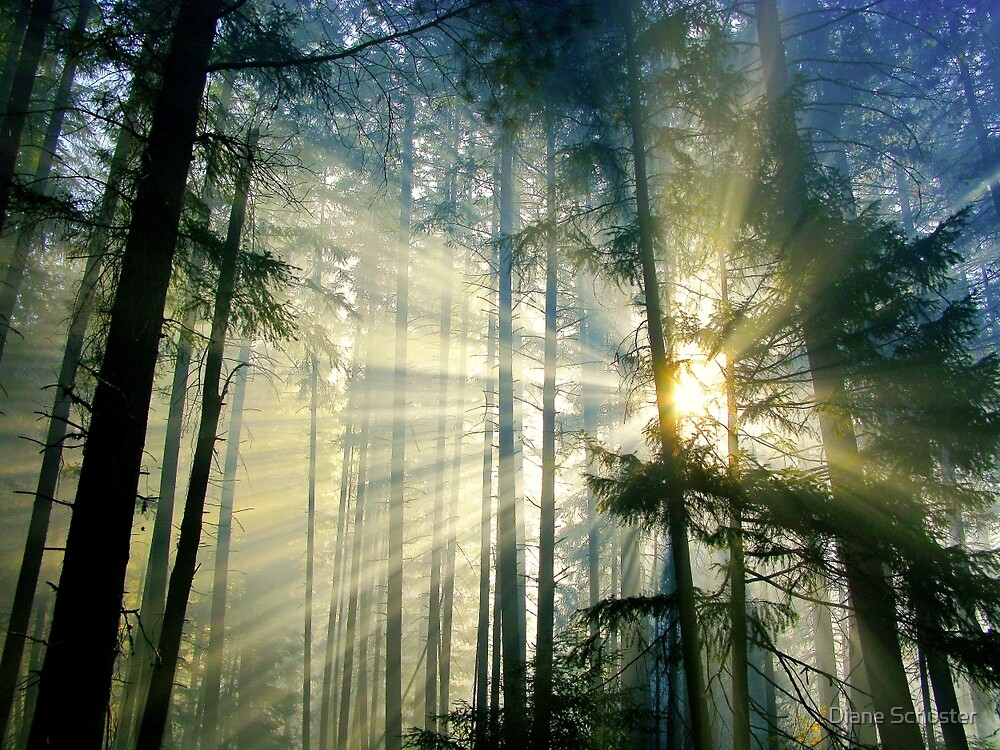 Behold The Light! by Diane Schuster