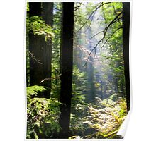 Dramatic Forest Poster