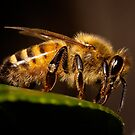 Perched Bee by Samuel Gundry