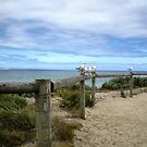 Welcoming Committee - Queenscliff Beach Vic by EdsMum