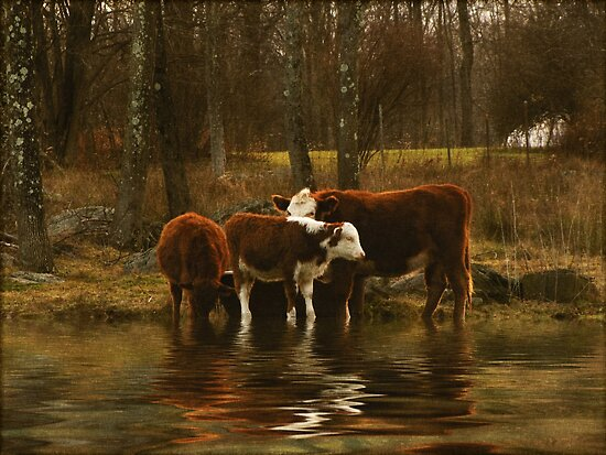 The Watering Hole by Pamela Phelps