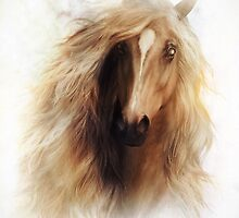 Sundance Horse Portrait by Shanina Conway