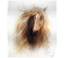 Sundance Horse Portrait Poster