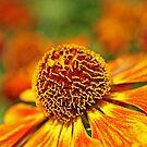 Autumn Orange by Curtis  Sheppard