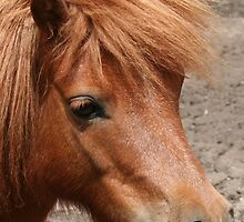 Tia - Miniature Pony by Jenny Brice