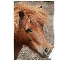 Tia - Miniature Pony Poster