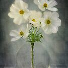 Classy Cosmos by Mandy Disher