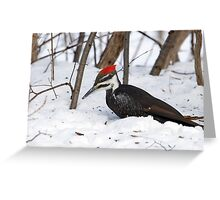 Snow Pecker Greeting Card