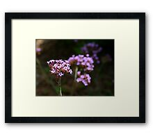 In Her Shadow, at the Edge of the Spotlight Framed Print