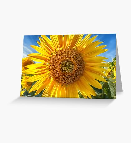 In Your Face Sunny Greeting Card