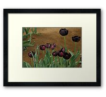Tulips..Queen Of The Night Variety Framed Print