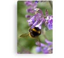 bumble bee sipping nectar Metal Print