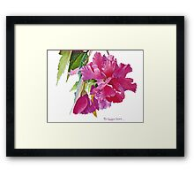 Ruffled Begonia Watercolor Framed Print