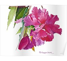 Ruffled Begonia Watercolor Poster
