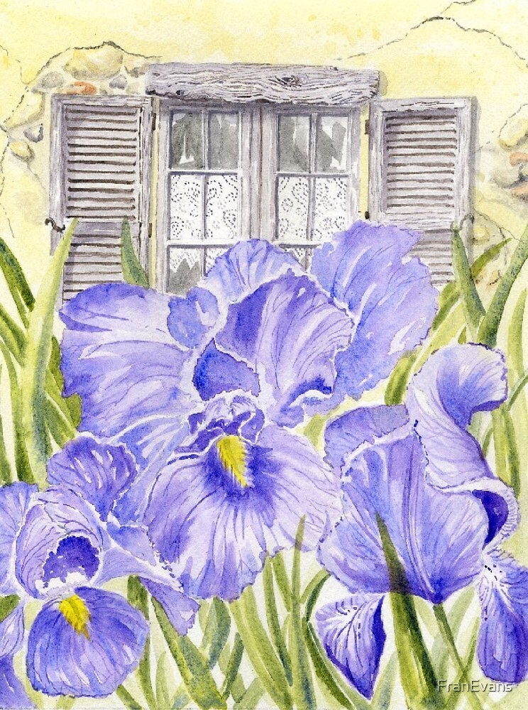 Irises and Lace by FranEvans