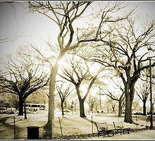National Mall, Fall by Melinda  Ison - Poor