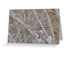 Little chickadee 2/22/10 Greeting Card